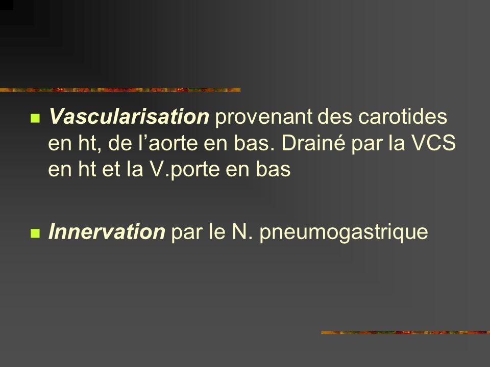Vascularisation provenant des carotides en ht, de laorte en bas. Drainé par la VCS en ht et la V.porte en bas Innervation par le N. pneumogastrique