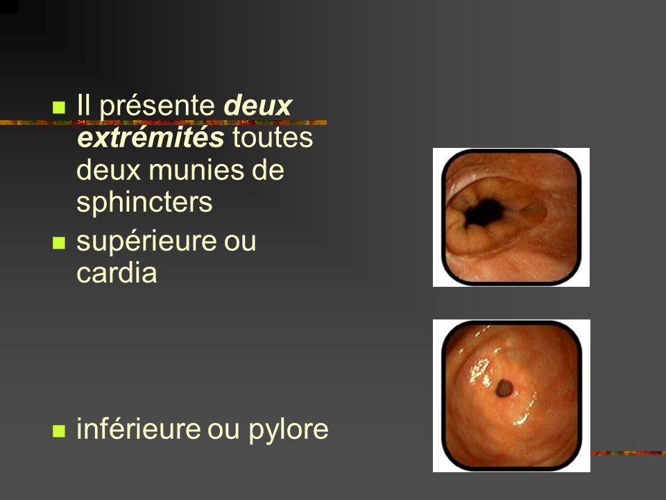 Il présente deux extrémités toutes deux munies de sphincters supérieure ou cardia inférieure ou pylore