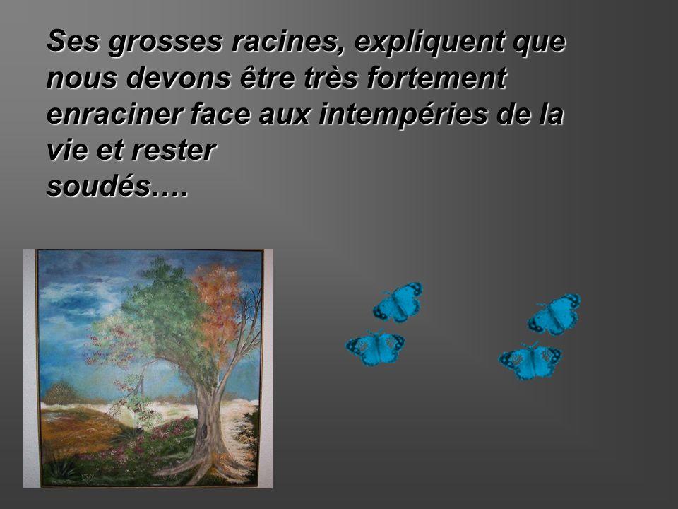 Ses grosses racines, expliquent que nous devons être très fortement enraciner face aux intempéries de la vie et rester soudés….