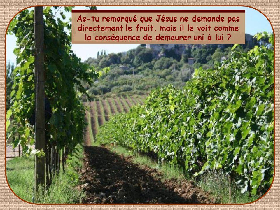 « Je suis la vigne, vous êtes les sarments : celui qui demeure en moi et en qui je demeure, celui-là portera du fruit en abondance car, en dehors de m