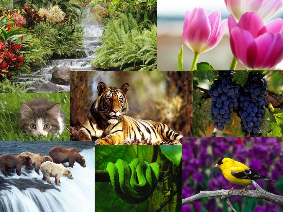 La Terre recèle de phénomènes naturels Qui offrent des multitudes de spectacles ahurissants .