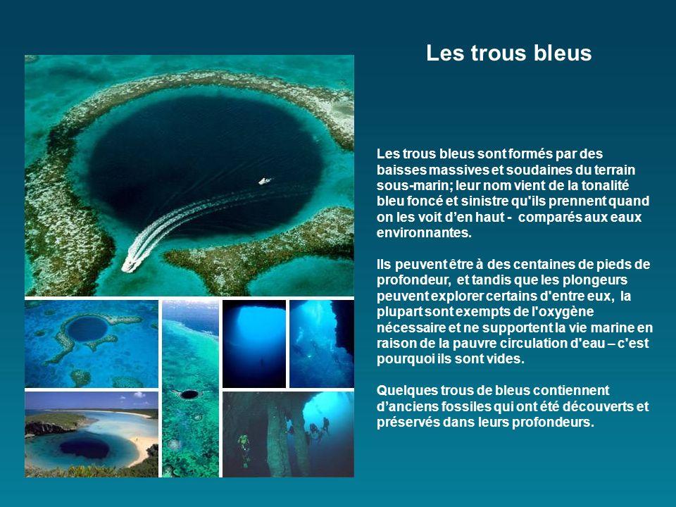 Les trous bleus sont formés par des baisses massives et soudaines du terrain sous-marin; leur nom vient de la tonalité bleu foncé et sinistre qu ils prennent quand on les voit den haut - comparés aux eaux environnantes.