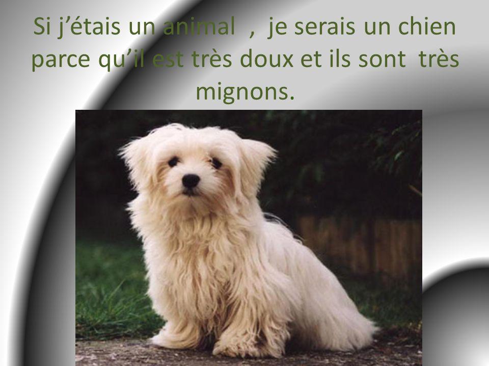 Si jétais un animal, je serais un chien parce quil est très doux et ils sont très mignons.