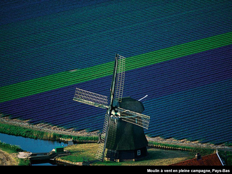 Molino en medio de los campos, Países Bajos Moulin à vent en pleine campagne, Pays-Bas