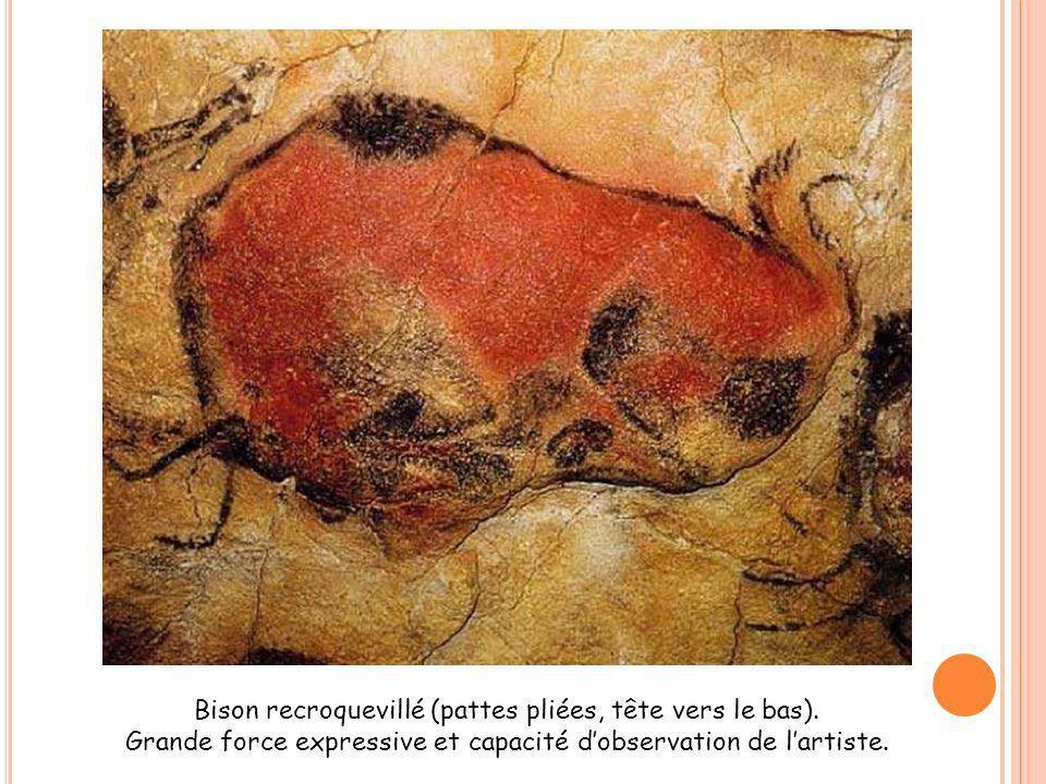 Bison recroquevillé (pattes pliées, tête vers le bas). Grande force expressive et capacité dobservation de lartiste.