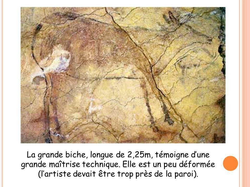 La grande biche, longue de 2,25m, témoigne dune grande maîtrise technique. Elle est un peu déformée (lartiste devait être trop près de la paroi).