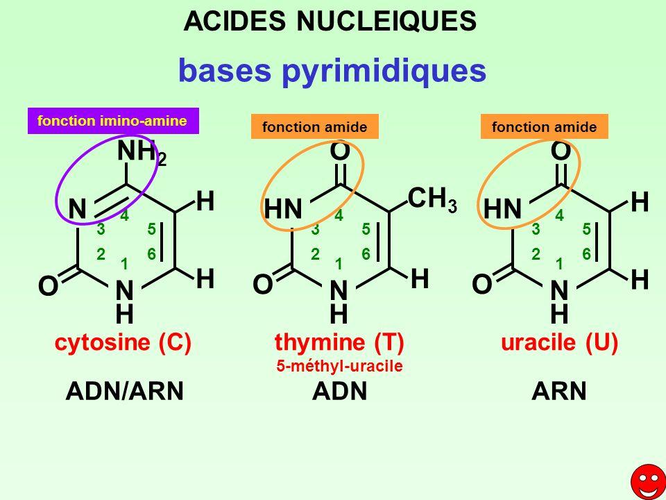 bases pyrimidiques cytosine (C)thymine (T) 5-méthyl-uracile uracile (U) ACIDES NUCLEIQUES ADN/ARNADNARN N NHNH 1 2 3 4 5 6 NH 2 HN NHNH 1 2 3 4 5 6 O