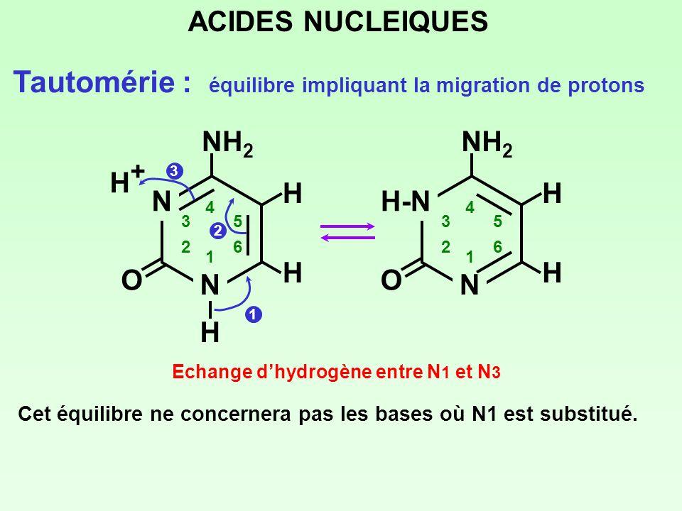 Tautomérie : équilibre impliquant la migration de protons ACIDES NUCLEIQUES N NHNH 1 2 3 4 5 6 NH 2 O H H H+H+ H-N 1 2 3 4 5 6 NH 2 O H H N Echange dh