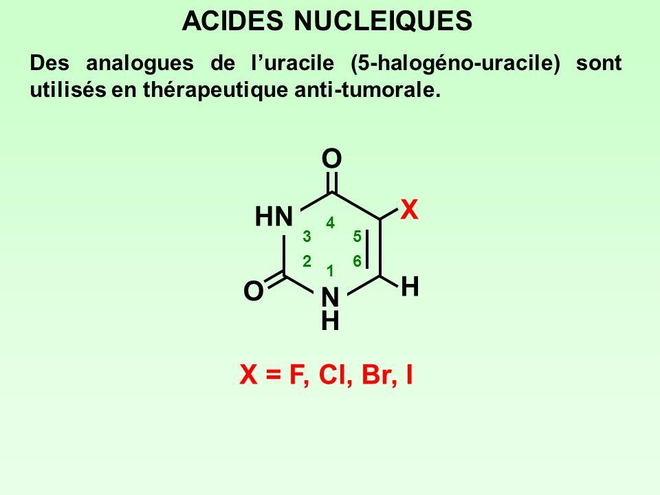 ACIDES NUCLEIQUES Des analogues de luracile (5-halogéno-uracile) sont utilisés en thérapeutique anti-tumorale. HN NHNH 1 2 3 4 5 6 O O H X X = F, Cl,