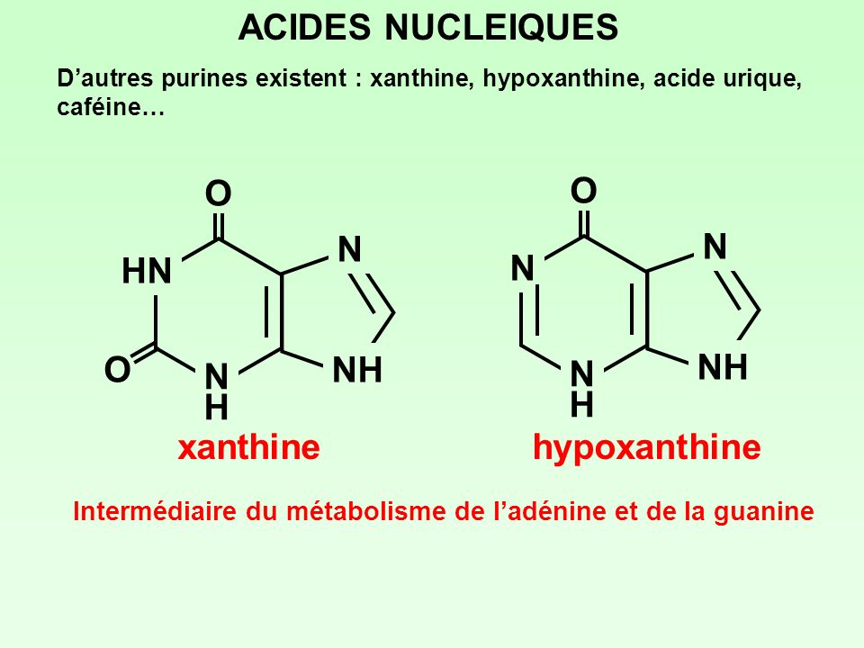 xanthine O HN NHNH N NH ACIDES NUCLEIQUES Dautres purines existent : xanthine, hypoxanthine, acide urique, caféine… O hypoxanthine O N NHNH N NH Inter