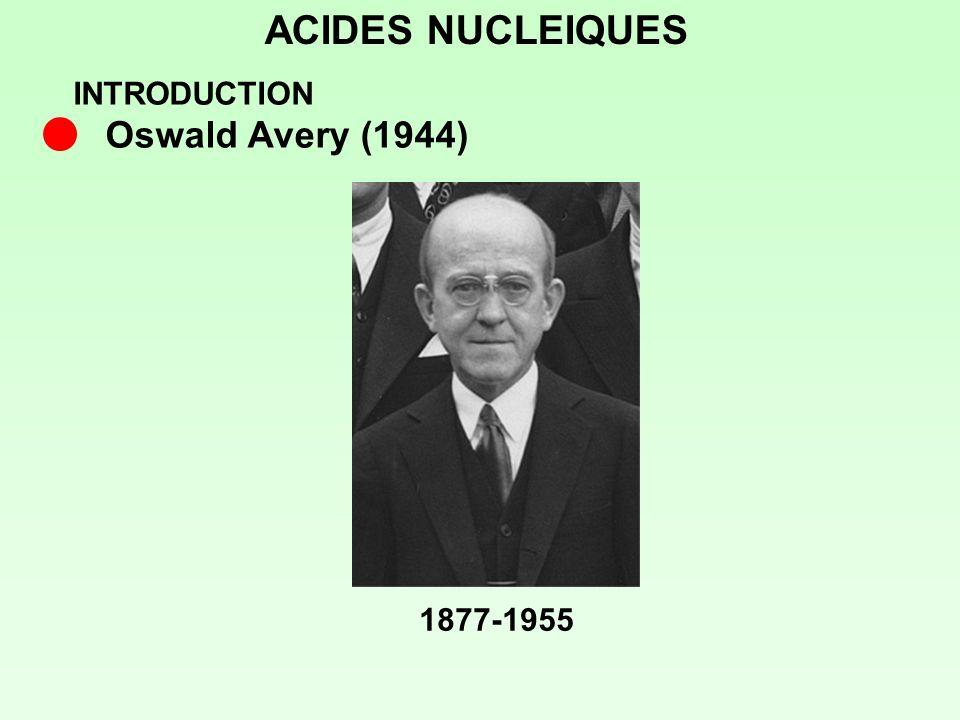 ACIDES NUCLEIQUES Travail basé sur une publication de 1928 dont lauteur est Fred Griffith 2 types de pneumocoques Expérience dOswald Avery (1944) S (smooth)R (rough) INTRODUCTION