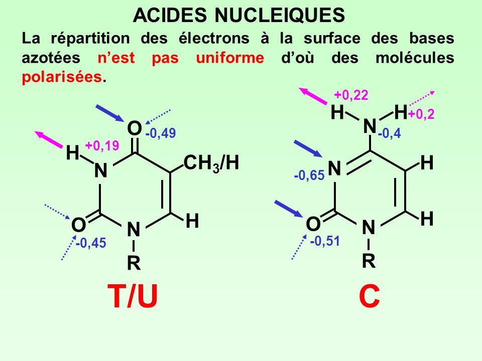 ACIDES NUCLEIQUES La répartition des électrons à la surface des bases azotées nest pas uniforme doù des molécules polarisées. N NRNR O O CH 3 /H H H T