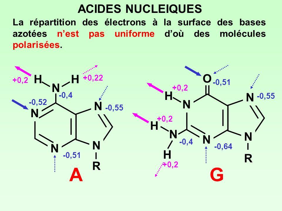 N N N N NRNR HH A ACIDES NUCLEIQUES La répartition des électrons à la surface des bases azotées nest pas uniforme doù des molécules polarisées. N N N