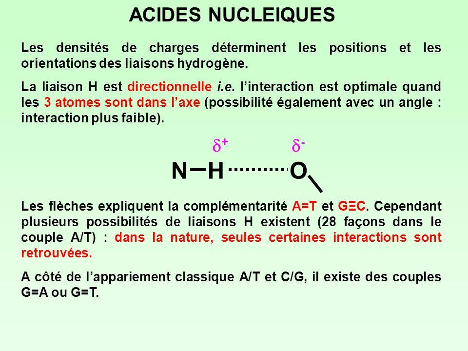 ACIDES NUCLEIQUES Les densités de charges déterminent les positions et les orientations des liaisons hydrogène. La liaison H est directionnelle i.e. l