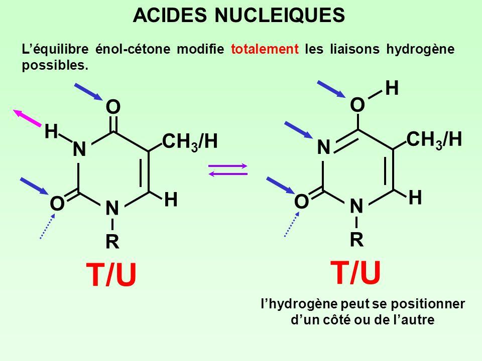 ACIDES NUCLEIQUES Léquilibre énol-cétone modifie totalement les liaisons hydrogène possibles. N NRNR O O CH 3 /H H H T/U N NRNR O O CH 3 /H H T/U H lh