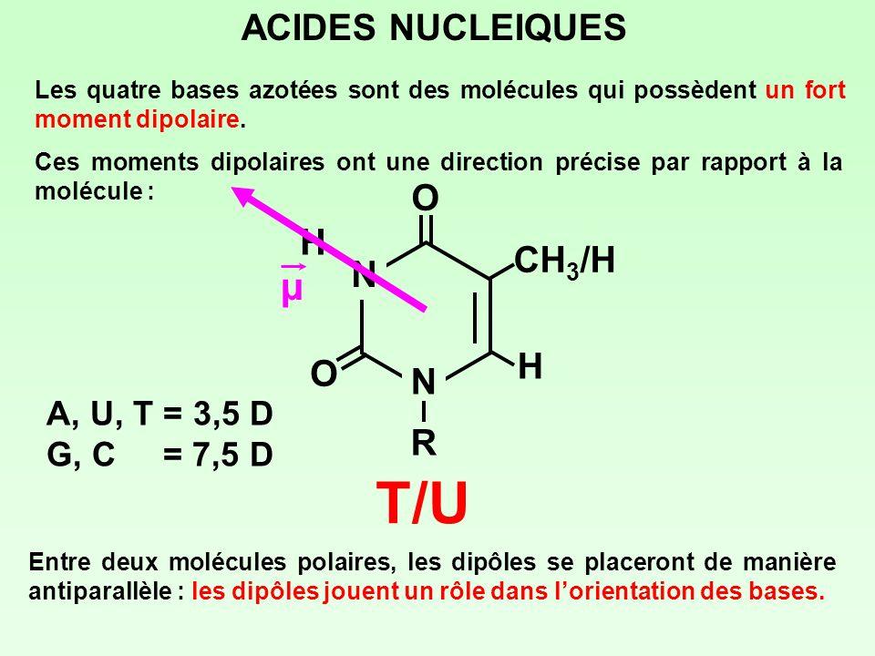 ACIDES NUCLEIQUES Les quatre bases azotées sont des molécules qui possèdent un fort moment dipolaire. Ces moments dipolaires ont une direction précise