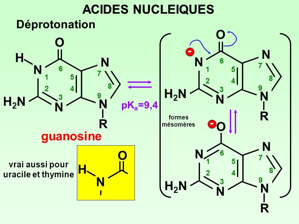 ACIDES NUCLEIQUES Déprotonation pK a =9,4 formes mésomères N N N NRNR 1 2 3 4 5 6 7 8 9 H2NH2N O guanosine H N N N NRNR 1 2 3 4 5 6 7 8 9 H2NH2N O - -