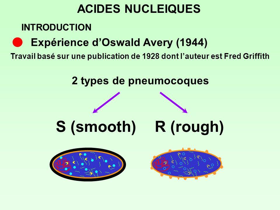 ACIDES NUCLEIQUES Travail basé sur une publication de 1928 dont lauteur est Fred Griffith 2 types de pneumocoques Expérience dOswald Avery (1944) S (s
