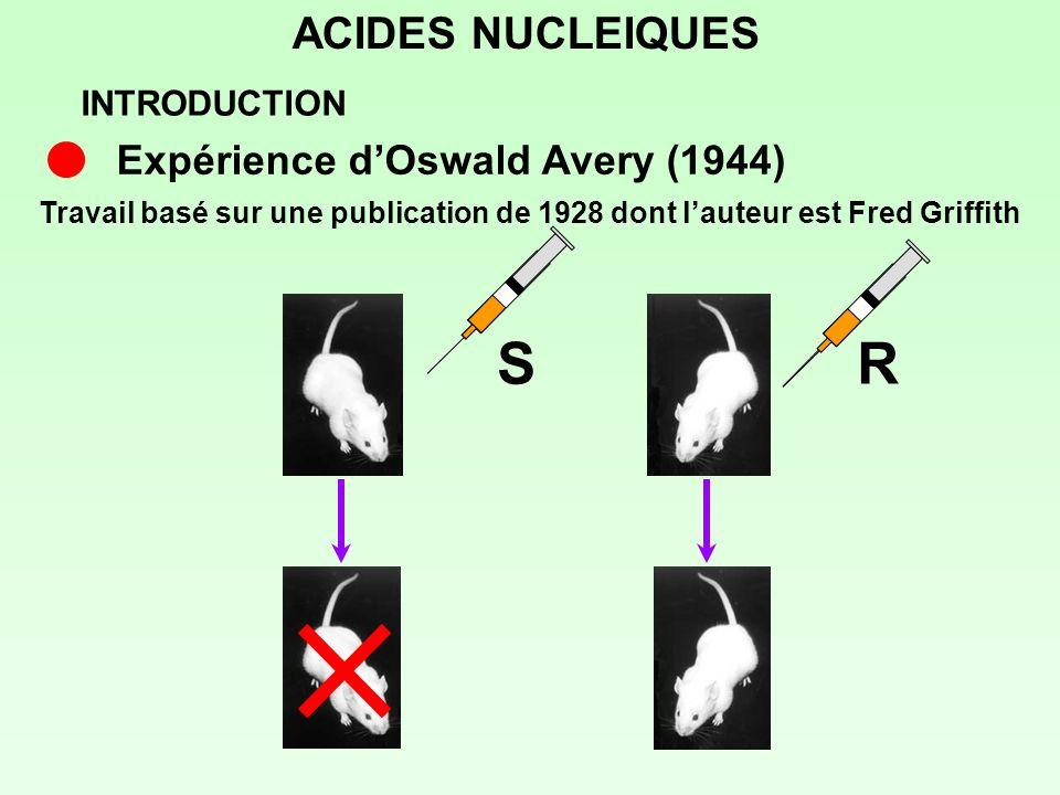 ACIDES NUCLEIQUES S + RS INTRODUCTION Expérience dOswald Avery (1944)