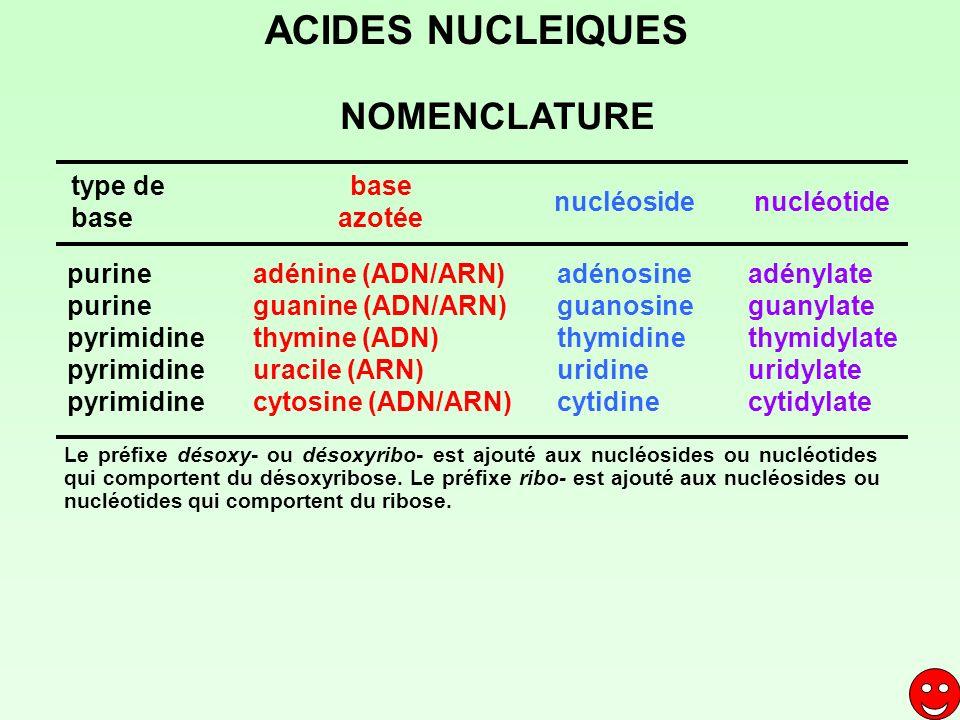 purine pyrimidine adénine (ADN/ARN) guanine (ADN/ARN) thymine (ADN) uracile (ARN) cytosine (ADN/ARN) adénosine guanosine thymidine uridine cytidine ad