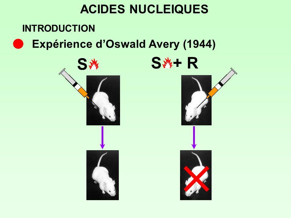 ACIDES NUCLEIQUES Souche R + capsule de S Souche R + lipides de S Souche R + protéines de S Souche R + acides nucléiques de S Souche R + ac.nucléiq.