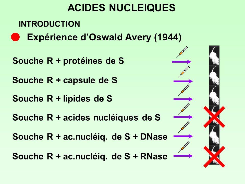 ACIDES NUCLEIQUES Souche R + capsule de S Souche R + lipides de S Souche R + protéines de S Souche R + acides nucléiques de S Souche R + ac.nucléiq. d