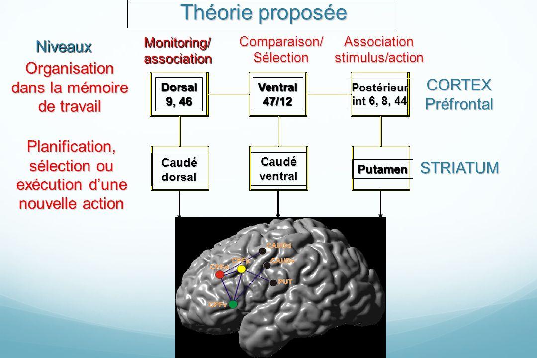 Théorie proposée Monitoring/association Comparaison/SélectionAssociationstimulus/action Organisation dans la mémoire de travail Planification, sélecti