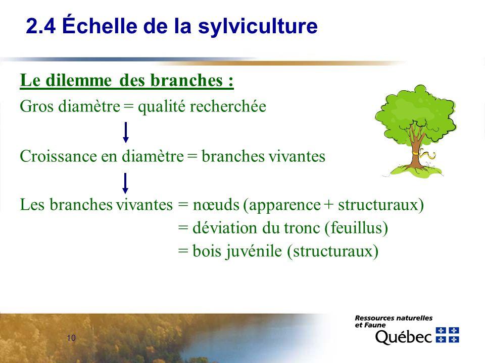 10 Le dilemme des branches : Gros diamètre = qualité recherchée Croissance en diamètre = branches vivantes Les branches vivantes = nœuds (apparence + structuraux) = déviation du tronc (feuillus) = bois juvénile (structuraux) 2.4 Échelle de la sylviculture