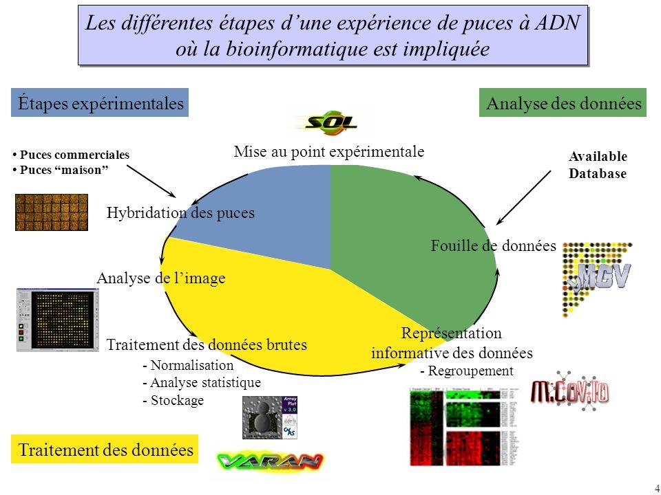 4 Fouille de données Analyse des données Puces commerciales Puces maison Hybridation des puces Étapes expérimentales Analyse de limage Traitement des données Mise au point expérimentale Available Database Traitement des données brutes - Normalisation - Analyse statistique - Stockage Représentation informative des données - Regroupement Les différentes étapes dune expérience de puces à ADN où la bioinformatique est impliquée Les différentes étapes dune expérience de puces à ADN où la bioinformatique est impliquée