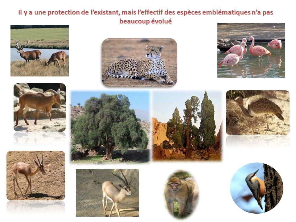 Il y a une protection de lexistant, mais leffectif des espèces emblématiques na pas beaucoup évolué