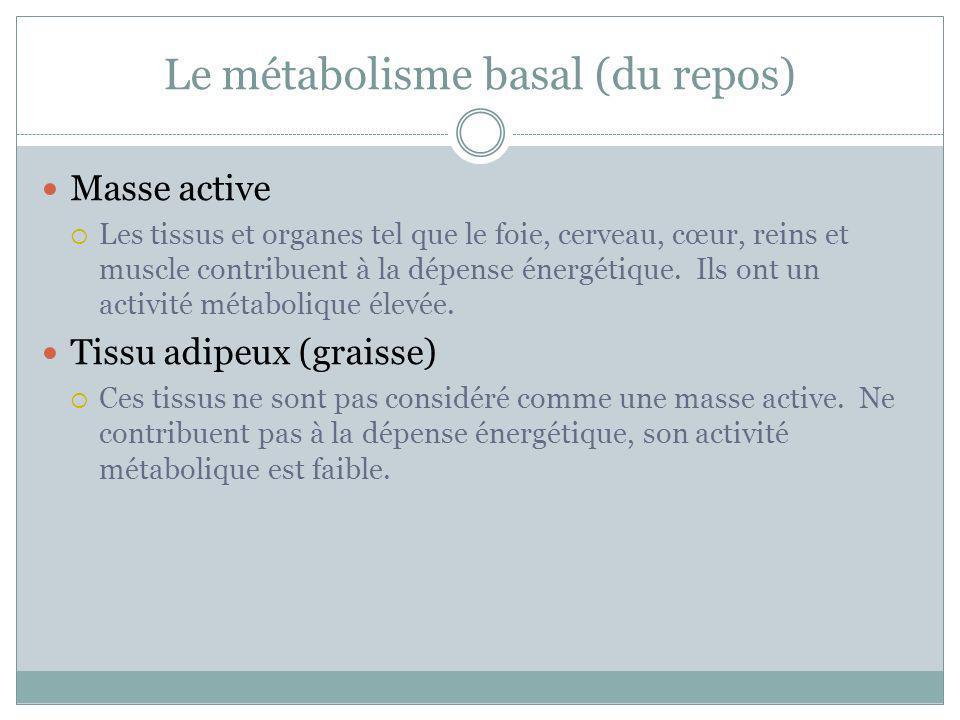 Le métabolisme basal (du repos) Masse active Les tissus et organes tel que le foie, cerveau, cœur, reins et muscle contribuent à la dépense énergétiqu