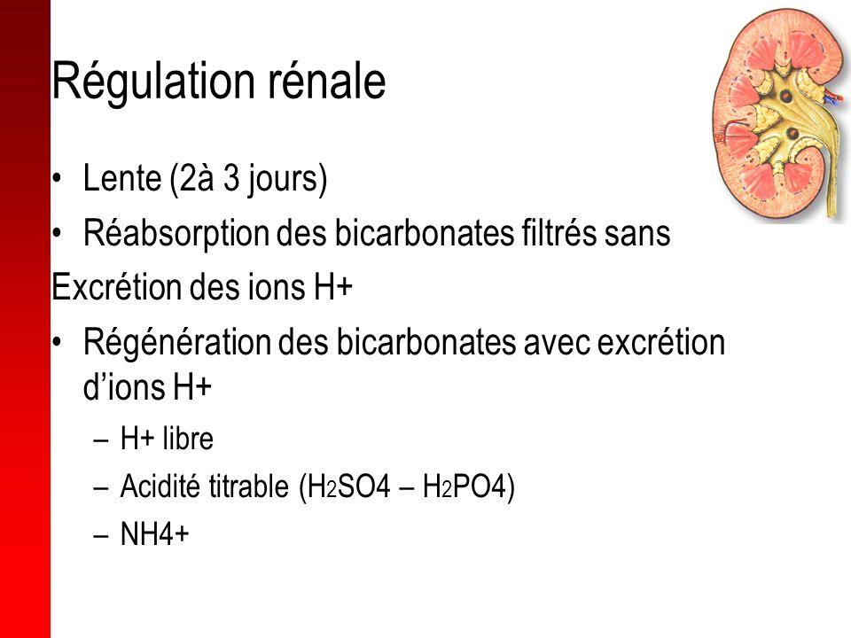 Régulation rénale Lente (2à 3 jours) Réabsorption des bicarbonates filtrés sans Excrétion des ions H+ Régénération des bicarbonates avec excrétion dio