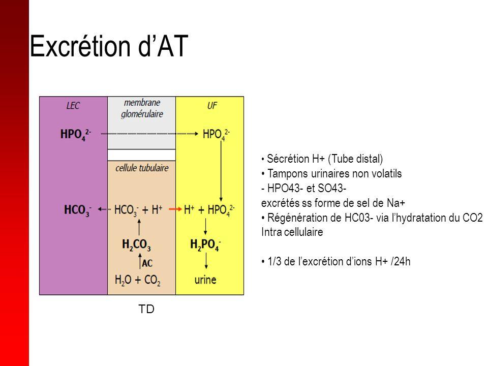 Excrétion dAT Sécrétion H+ (Tube distal) Tampons urinaires non volatils - HPO43- et SO43- excrétés ss forme de sel de Na+ Régénération de HC03- via lh