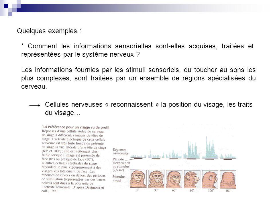 Quelques exemples : * Comment les informations sensorielles sont-elles acquises, traitées et représentées par le système nerveux .