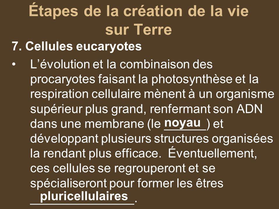Étapes de la création de la vie sur Terre 7. Cellules eucaryotes Lévolution et la combinaison des procaryotes faisant la photosynthèse et la respirati