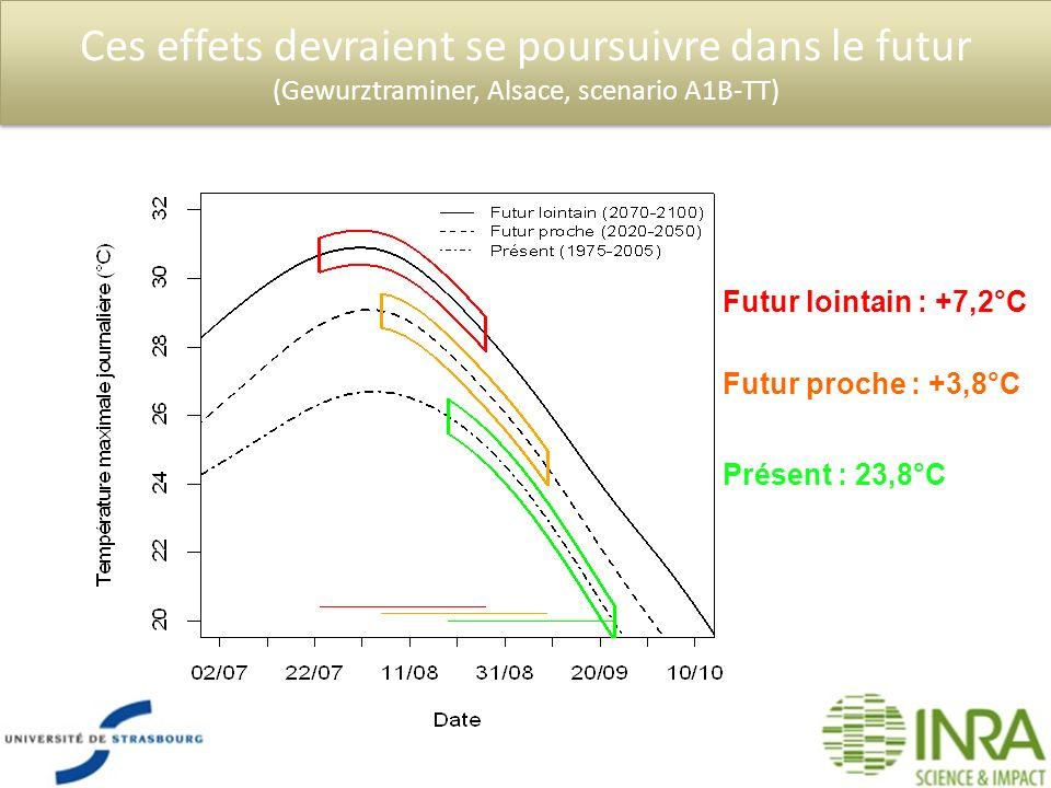 Ces effets devraient se poursuivre dans le futur (Gewurztraminer, Alsace, scenario A1B-TT) Présent : 23,8°C Futur proche : +3,8°C Futur lointain : +7,