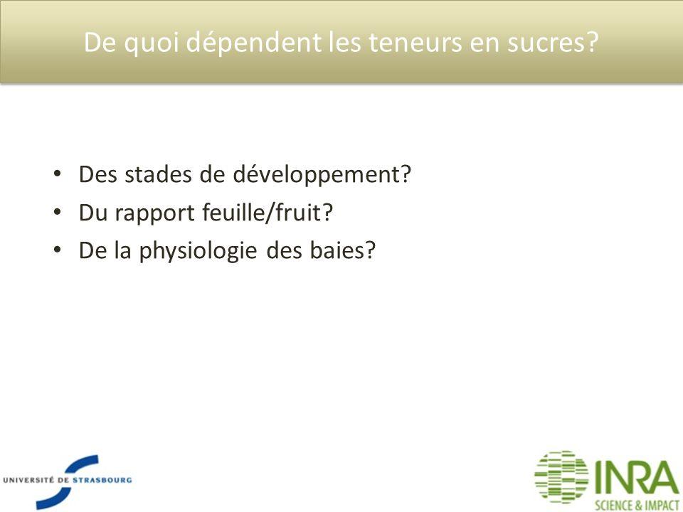 De quoi dépendent les teneurs en sucres? Des stades de développement? Du rapport feuille/fruit? De la physiologie des baies?