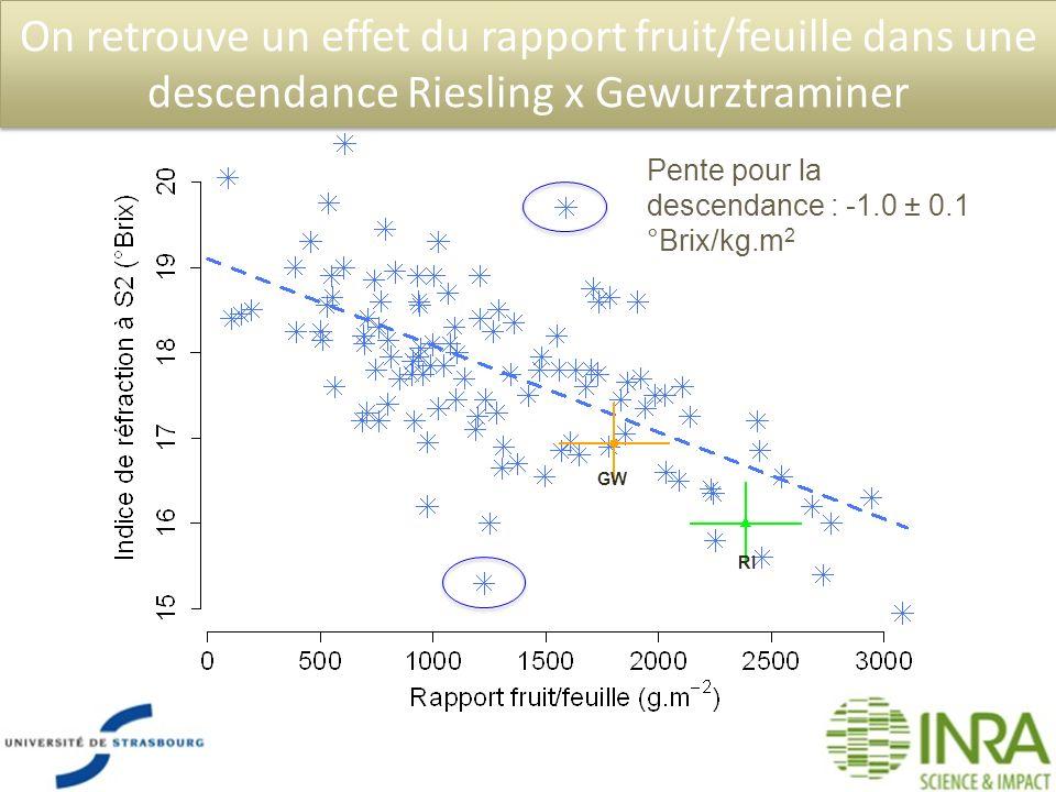 On retrouve un effet du rapport fruit/feuille dans une descendance Riesling x Gewurztraminer Pente pour la descendance : -1.0 ± 0.1 °Brix/kg.m 2 GW RI
