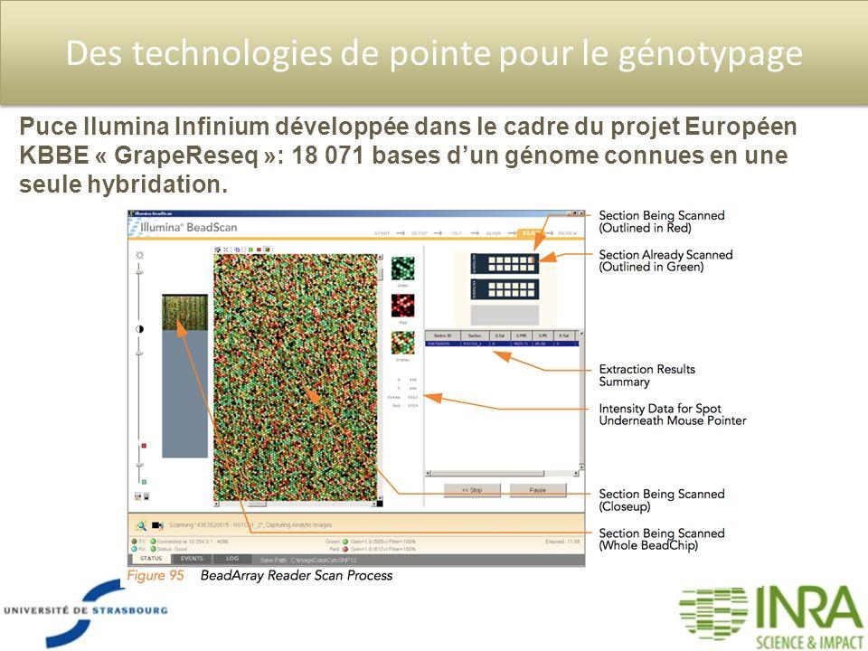 Des technologies de pointe pour le génotypage Puce Ilumina Infinium développée dans le cadre du projet Européen KBBE « GrapeReseq »: 18 071 bases dun