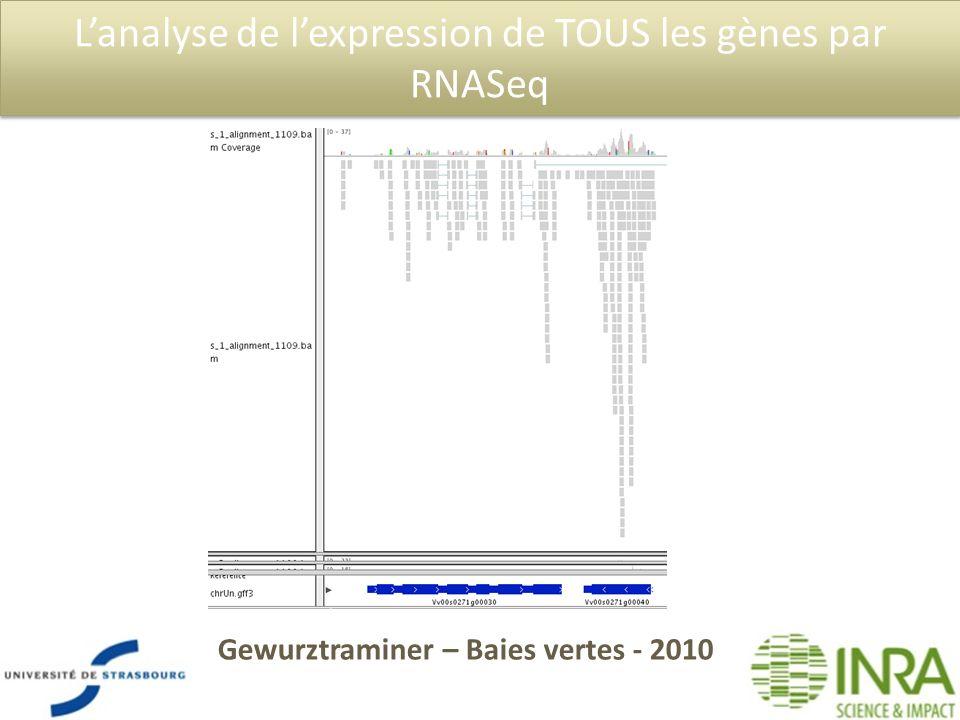 Lanalyse de lexpression de TOUS les gènes par RNASeq Gewurztraminer – Baies vertes - 2010