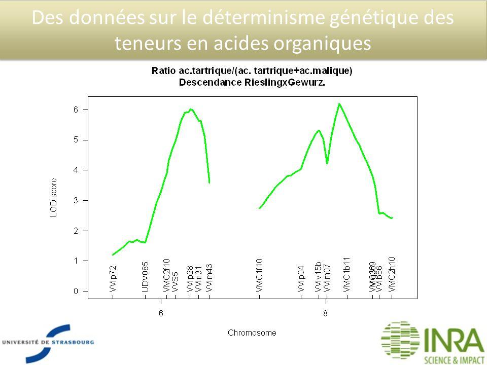 Des données sur le déterminisme génétique des teneurs en acides organiques