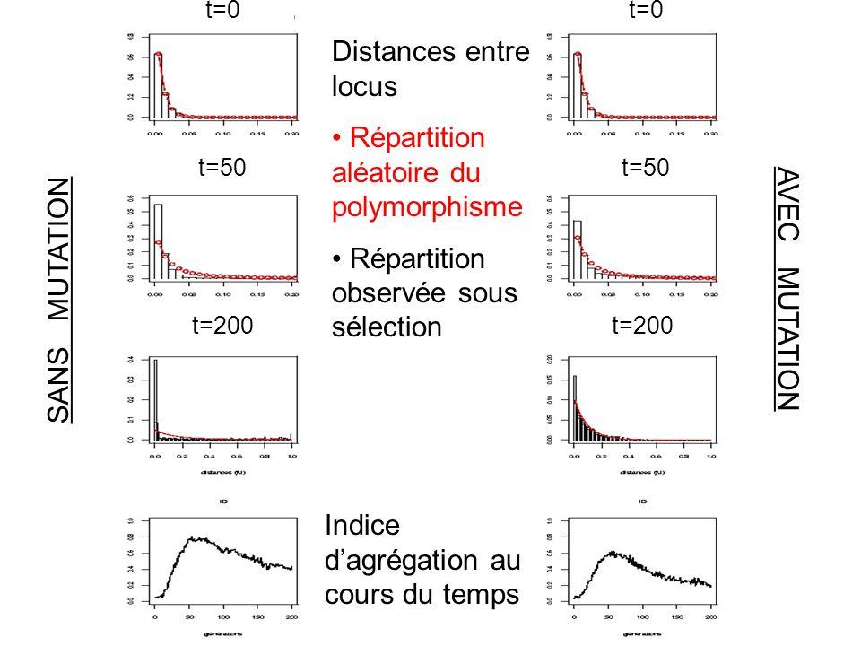 SANS MUTATION AVEC MUTATION Distances entre locus Répartition aléatoire du polymorphisme Répartition observée sous sélection Indice dagrégation au cours du temps t=50 t=0 t=200 t=50 t=0 t=200