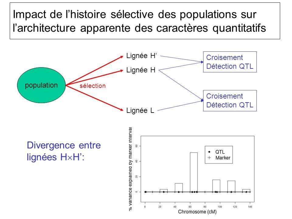 Impact de lhistoire sélective des populations sur larchitecture apparente des caractères quantitatifs population Lignée H Lignée L sélection Croisement Détection QTL Croisement Détection QTL Divergence entre lignées H H: