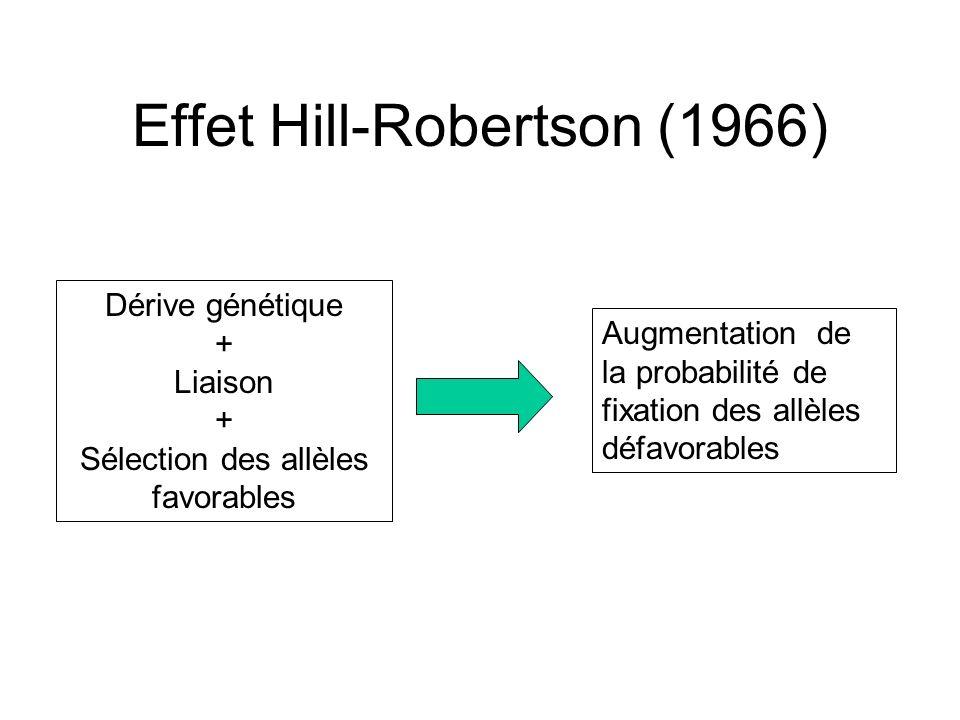 Effet Hill-Robertson (1966) Dérive génétique + Liaison + Sélection des allèles favorables Augmentation de la probabilité de fixation des allèles défavorables