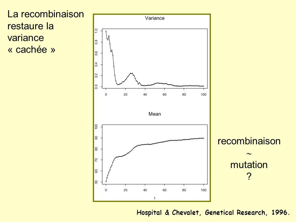 La recombinaison restaure la variance « cachée » recombinaison mutation ? Hospital & Chevalet, Genetical Research, 1996.