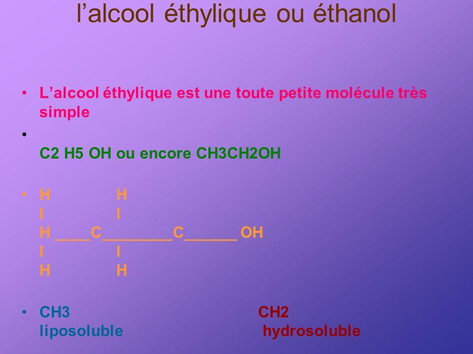 lalcool éthylique ou éthanol Lalcool éthylique est une toute petite molécule très simple C2 H5 OH ou encore CH3CH2OH HH II H ____C________C______ OH I