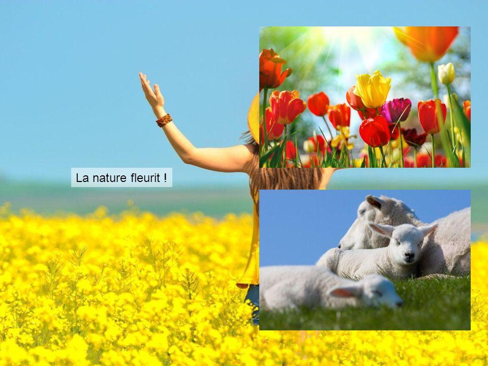 La nature fleurit !