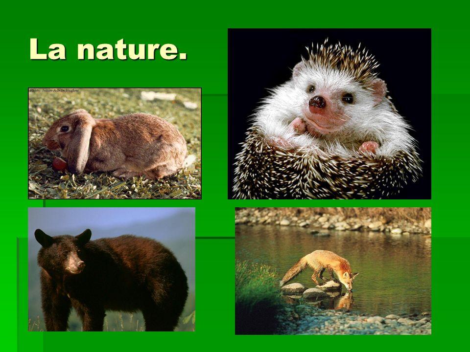 La nature.