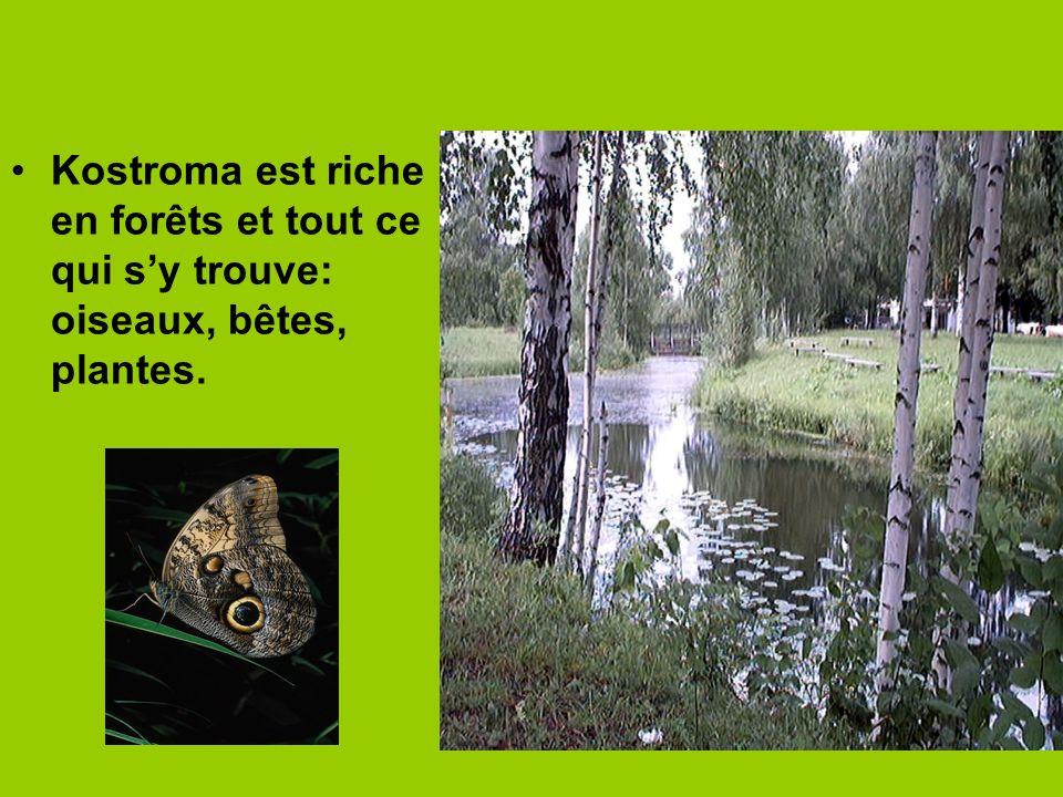 Kostroma est riche en forêts et tout ce qui sy trouve: oiseaux, bêtes, plantes.