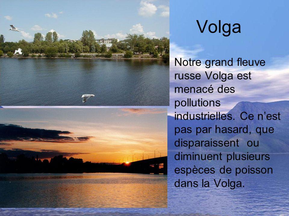 Volga Notre grand fleuve russe Volga est menacé des pollutions industrielles. Ce nest pas par hasard, que disparaissent ou diminuent plusieurs espèces